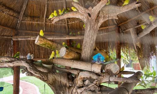PA-aviary